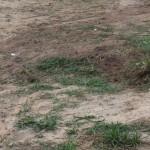 Kein Hausbau ohne Bodengutachten