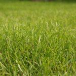 Rasen richtig pflegen und vertikutieren
